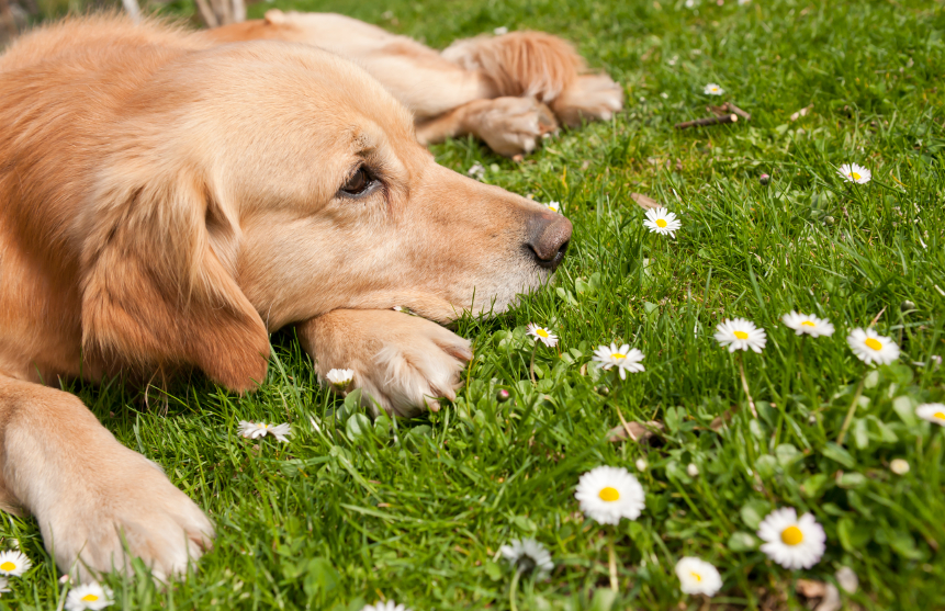 Stress Relief for Animals
