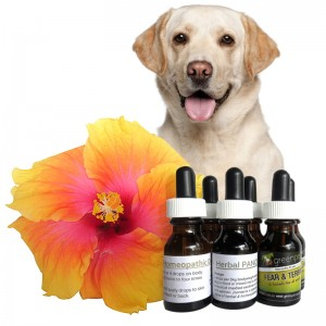 Homeopathic, Herbal & Flower Remedies