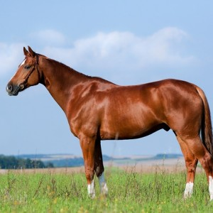 Nutritional Supplements & Food for Horses