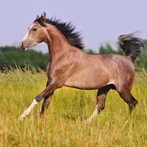 Calm Healthy Horses Supplements