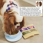 Doggie-Testimonials-Leo